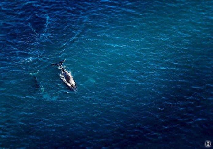 Величественные киты 24