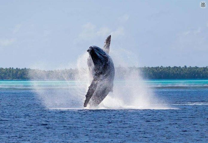 Величественные киты 25