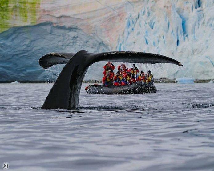Величественные киты 28