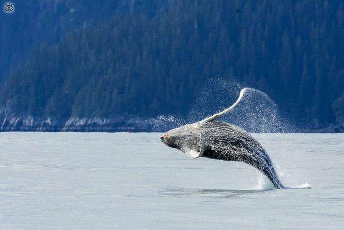 Величественные киты 30