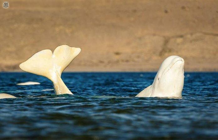 Величественные киты 34