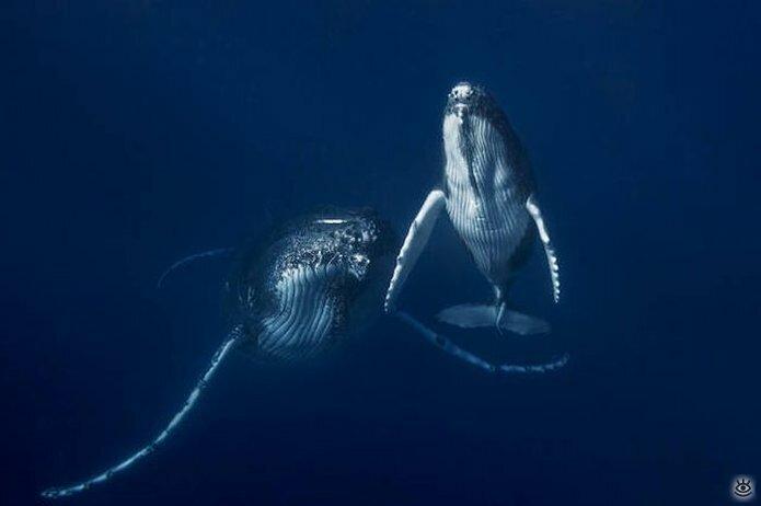 Величественные киты 35