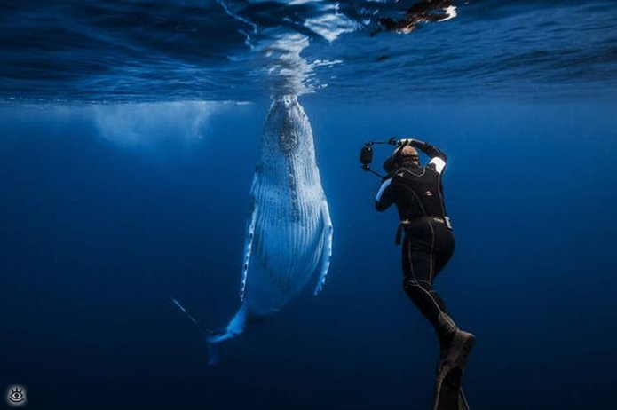 Величественные киты 36