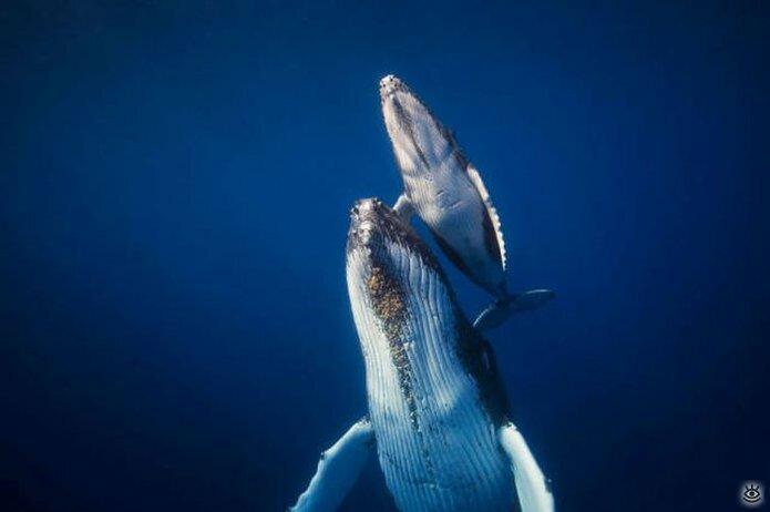 Величественные киты 38