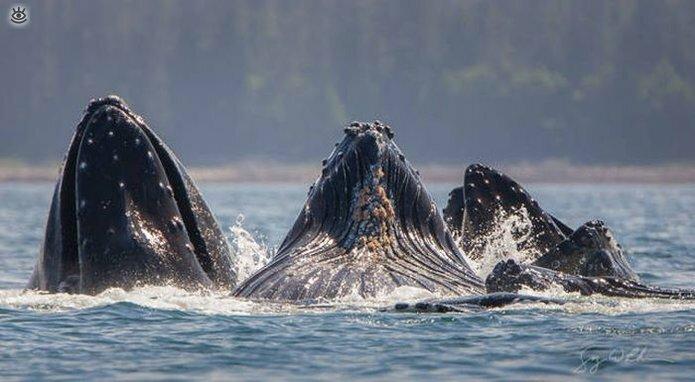 Величественные киты 39