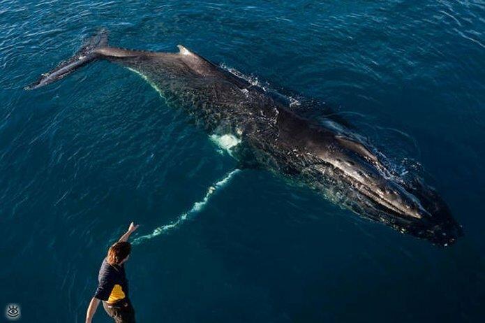 Величественные киты 41