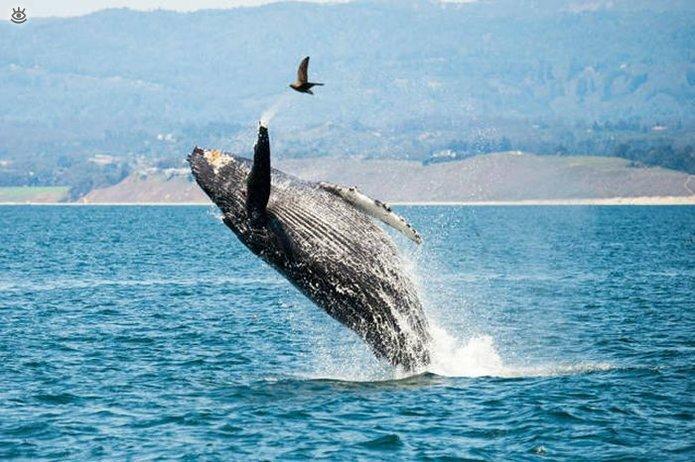 Величественные киты 42