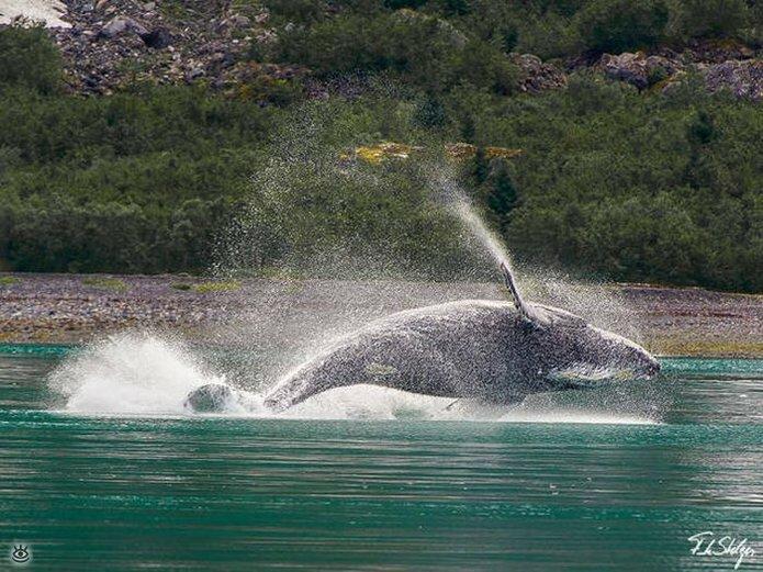 Величественные киты 45