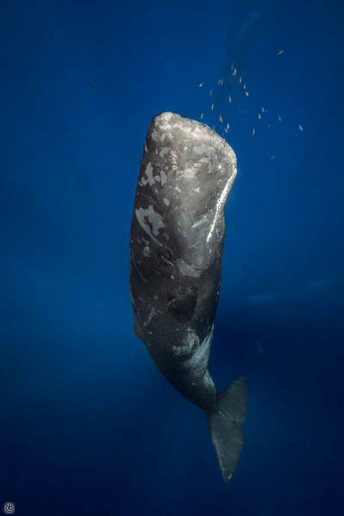Величественные киты 46