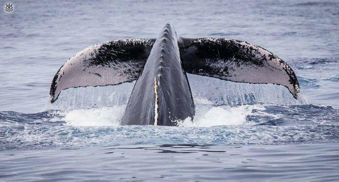 Величественные киты 49