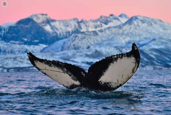 Величественные киты 50