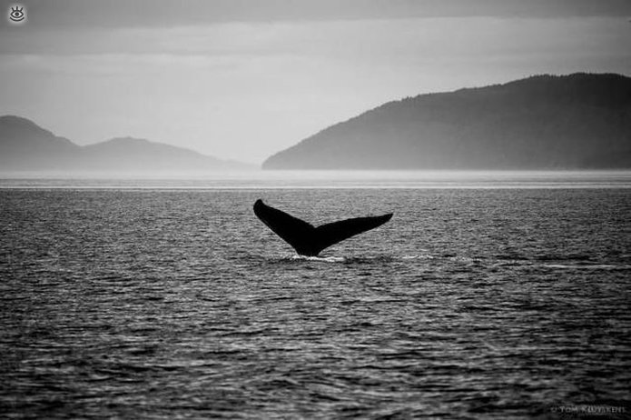 Величественные киты 52