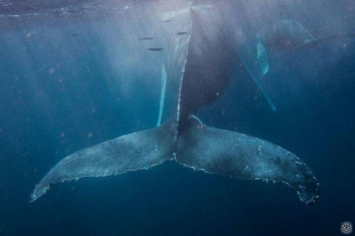 Величественные киты 53