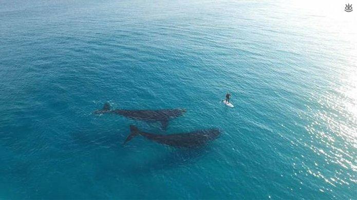 Величественные киты 54