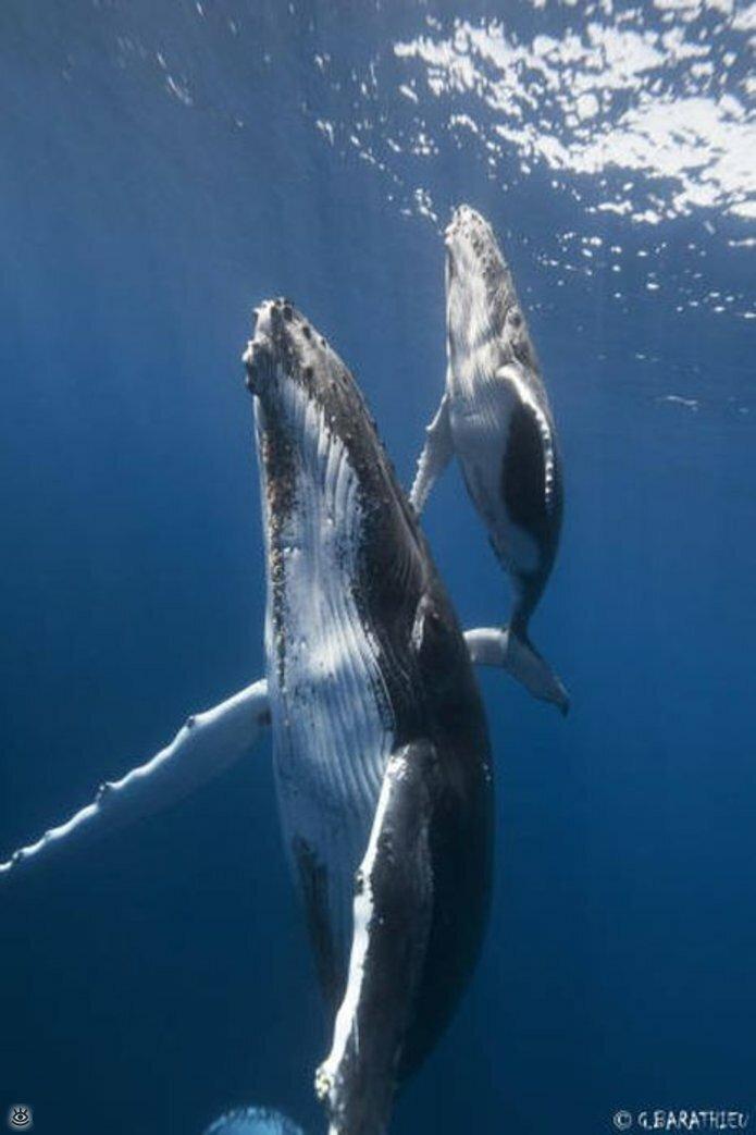 Величественные киты 55