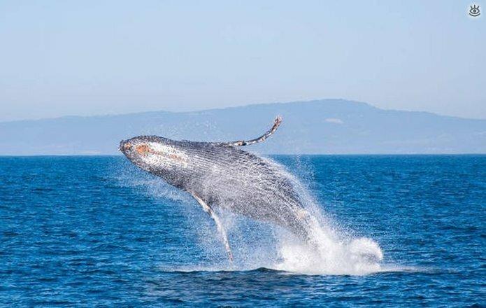 Величественные киты 56