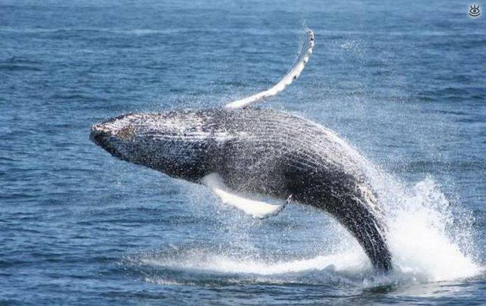 Величественные киты 57
