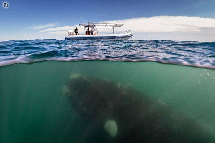 Величественные киты 59