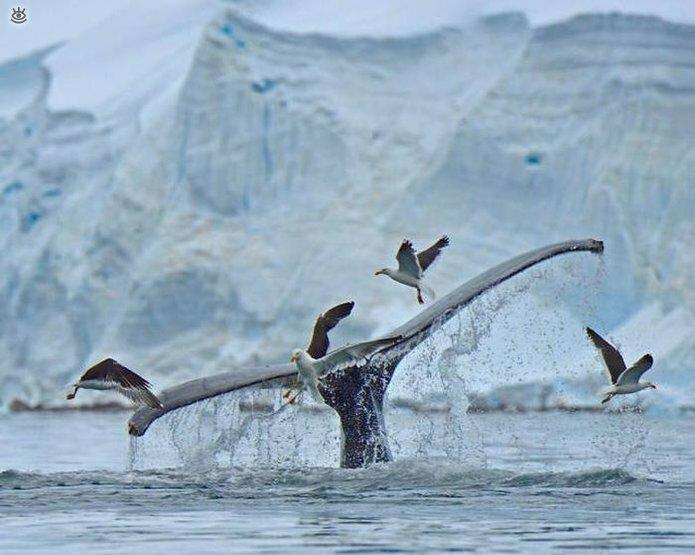 Величественные киты 61