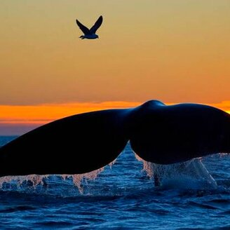 Величественные киты смешных фото приколов
