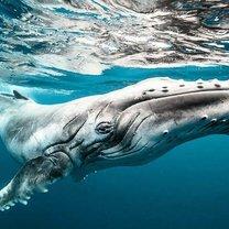 Фото приколы Величественные киты (62 фото)
