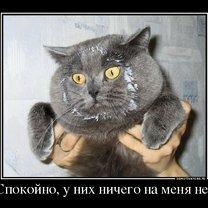 Спокойствие, только спокойствие! смешных фото приколов