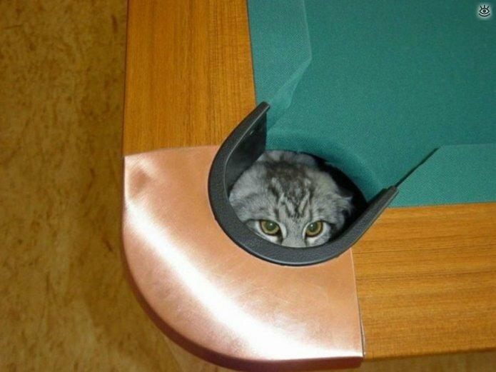 Кошки играют в прятки 4