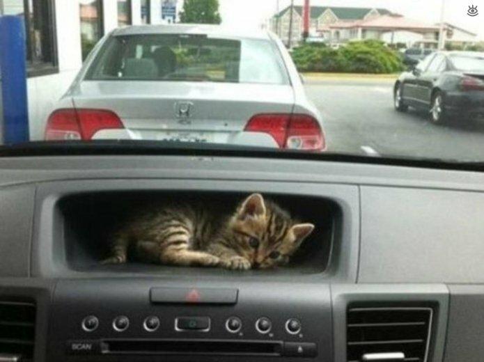 Кошки играют в прятки 6
