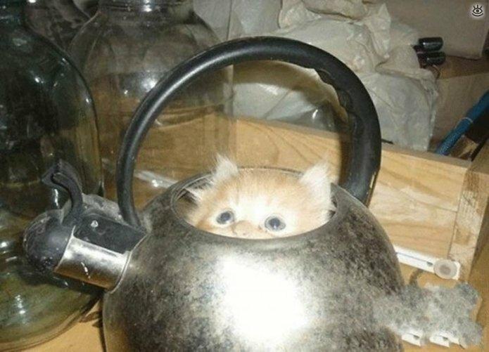 Кошки играют в прятки 8