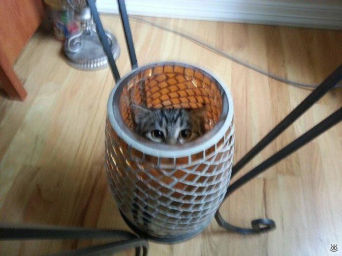 Кошки играют в прятки 12