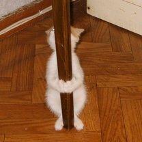 Фото приколы Кошки играют в прятки (16 фото)