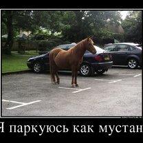 Фото приколы Не держи эмоции в себе! (25 фото)