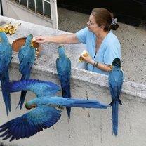 Кормим голубей в разных странах!