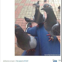 Фото приколы Смешно сказали и нелепо написали (42 фото)
