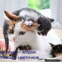 Субботняя котоматрица смешных фото приколов
