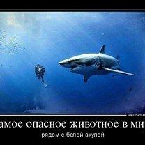 Фото приколы Кто самое опасное животное? (29 фото)