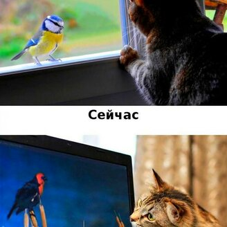 Кошки против современных технологий