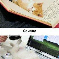Фото приколы Кошки против современных технологий (15 фото)