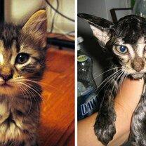 Коты до и после купания