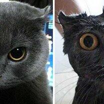 Фото приколы Коты до и после купания (19 фото)