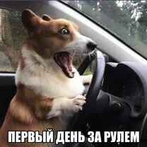 Фото приколы Сборка автомобильных казусов в фото (52 фото)