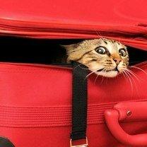 Где может спрятаться кот? смешных фото приколов