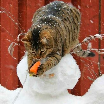 Фото приколы Коты-воришки и коты-проказники (17 фото)