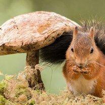 Забавные и красивые зверушки смешных фото приколов