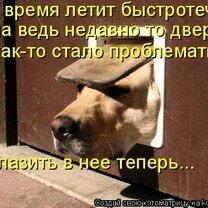 Фото приколы Весёлые и милые котоматрицы (36 фото)