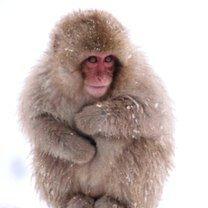 Фото приколы Смешные обезьянки (40 фото)