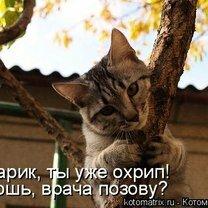 Фото приколы Котоматричный позитивчик (40 фото)
