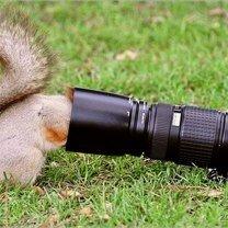 Смешные белочки смешных фото приколов