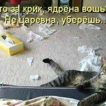 Фото приколы Картинки-весёлости с подписями (30 фото)