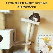 Если вы хотите завести кота...